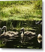 One Honk Says It All Metal Print by Thomas Young