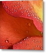 One In Ten Thousand  Metal Print by JC Findley