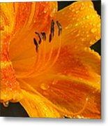 Orange Rain Metal Print by Karen Wiles