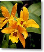 Orange Spotted Lip Cattleya Orchid Metal Print by Rudy Umans
