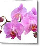 Orchid Flowers - Pink Metal Print by Natalie Kinnear