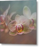 Orchids In The Mist Metal Print by John Kain
