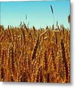 Our Daily Bread Metal Print by Karen Wiles