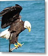Our Finest American Bald Eagle Metal Print by Mitch Spillane