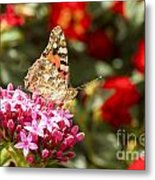 Painted Lady Butterfly Metal Print by Eyal Bartov