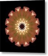 Pale Pink Tulip Flower Mandala Metal Print by David J Bookbinder