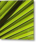 Palm Lines Metal Print by Mike  Dawson