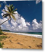 Palm Tree On Maunabo Beach Puerto Rico Metal Print by George Oze