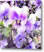 Pansies Watercolor Metal Print by John Edwards