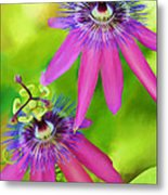 Passiflora Piresii Vine  - Passiflora Twins Metal Print by Michelle Wiarda