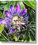 Passion Fruit Flower Metal Print by Nato  Gomes