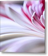 Pastel Gerbera Metal Print by Adam Romanowicz