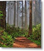 Path Thru The Redwoods Metal Print by Michael  Ayers