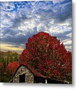 Pear Trees On The Farm Metal Print by Debra and Dave Vanderlaan