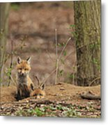 Peeking From The Fox Hole Metal Print by Everet Regal