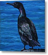 Pelagic Cormorant Metal Print by Crista Forest