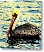 Pelican Waters Metal Print by Karen Wiles