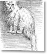 Persian Cat Metal Print by Sarah Parks