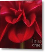 Petals Metal Print by Cheryl Young