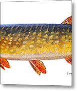 Pike Metal Print by Carey Chen