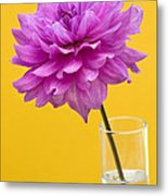 Pink Dahlia In A Vase Against Yellow Orange Background Metal Print by Natalie Kinnear