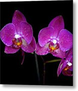 Pink Orchid  Metal Print by Toppart Sweden