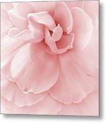 Pink Ruffled Begonia Flower Metal Print by Jennie Marie Schell