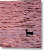 Pink Sunset With Duck In Silhouette Metal Print by Marianne Campolongo