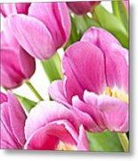 Pink Tulips Metal Print by Elena Elisseeva