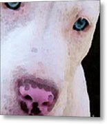 Pit Bull Art - Not A Fighter Metal Print by Sharon Cummings