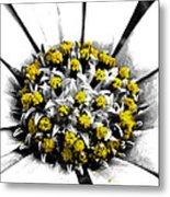 Pollen  Metal Print by Steve Taylor