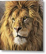 Portrait Of A Lion Metal Print by Lucie Bilodeau