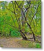 Poudre Trees-2 Metal Print by Baywest Imaging