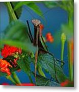 Praying Mantis Metal Print by Raymond Salani III