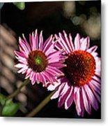 Pretty Flowers Metal Print by Joe Fernandez