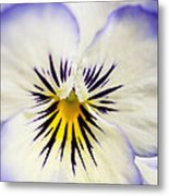 Pretty Pansy Close Up Metal Print by Natalie Kinnear