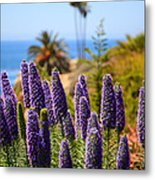 Pride Of Madeira Flowers In Orange County California Metal Print by Paul Velgos