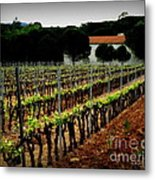 Provence Vineyard Metal Print by Lainie Wrightson