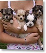 Puppies In Maria's Arms Metal Print by John Lautermilch