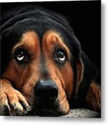 Puppy Dog Eyes Metal Print by Christina Rollo