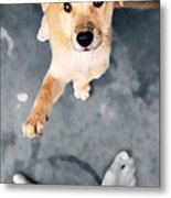 Puppy Saluting Metal Print by William Voon