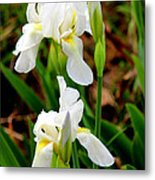 Purity In Pairs Metal Print by Kathy  White