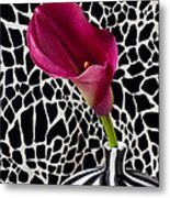 Purple Calla Lily Metal Print by Garry Gay