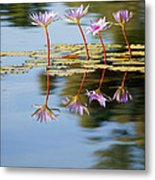 Purple Lillies Metal Print by Peter Tellone