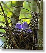Purple Peeps Pair Metal Print by Al Powell Photography USA