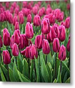 Purple Tulips Metal Print by Inge Johnsson