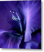 Purple Velvet Gladiolus Flower Metal Print by Jennie Marie Schell
