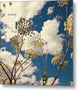 Queen Anne Lace And Sky I Metal Print by Jenny Rainbow