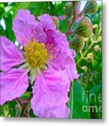 Queen Flower Or Giant Crepe Myrtle Flower Metal Print by Lanjee Chee
