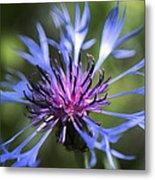 Radiant Flower Metal Print by Belinda Greb